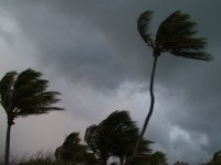 Stormy Palm Trees Stock Video Footage