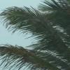 Palm Tree Storm Stock Video Footage