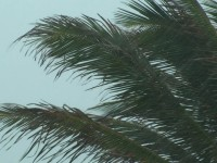 Palm Tree Storm Stock Video Footage