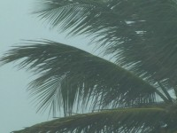 Hurricane Palm Tree Stock Video Footage