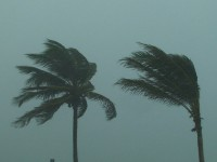 Hurricane Palm Trees Stock Video Footage