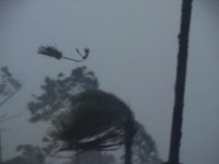 Hurricane Winds and Rain Blowing Palm Tree Debris
