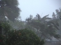 Hurricane Winds and Rain Stock Video Footage
